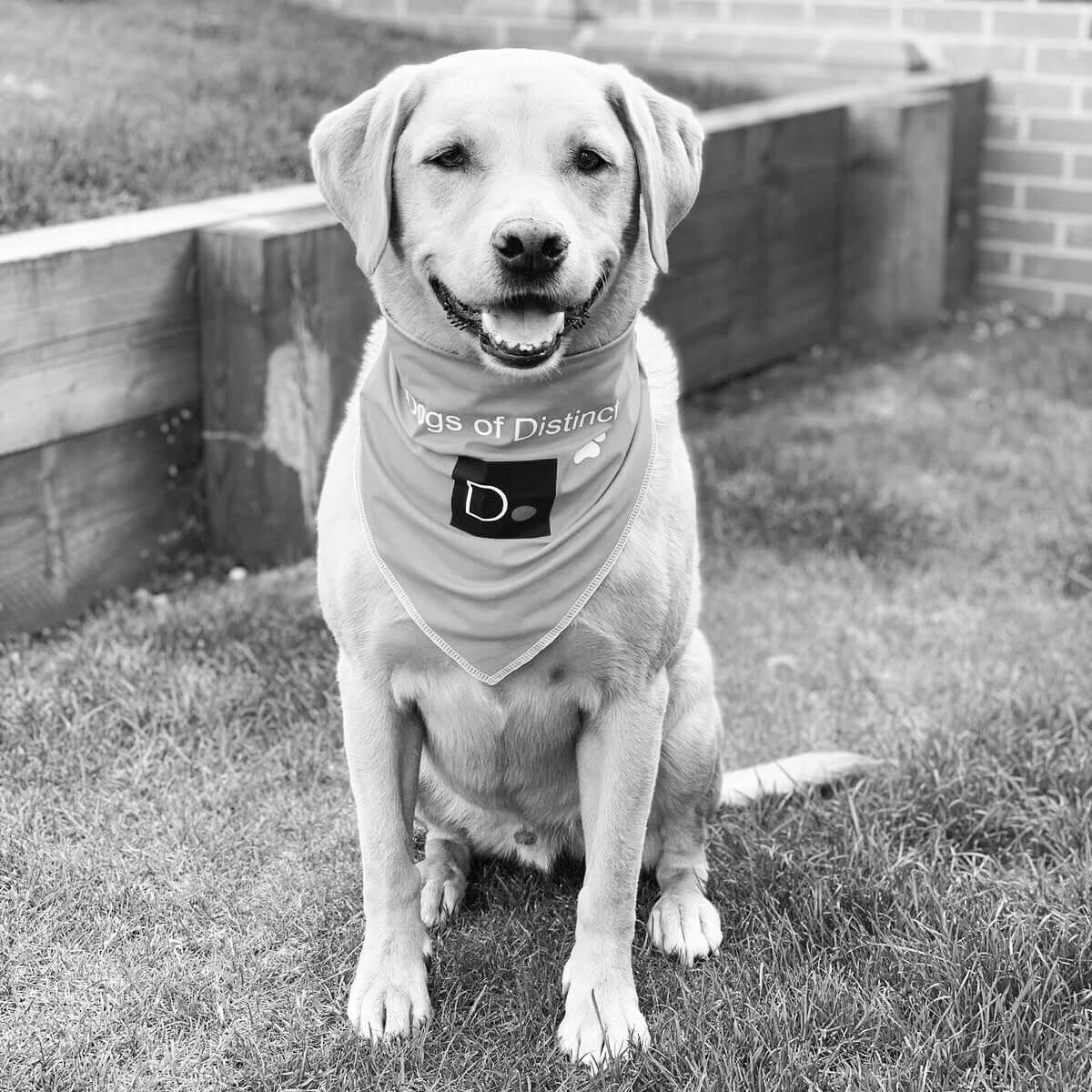 Brody Dog