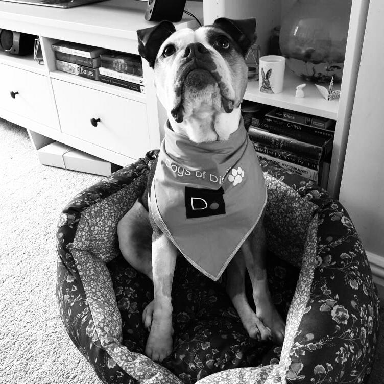 Taz Dog