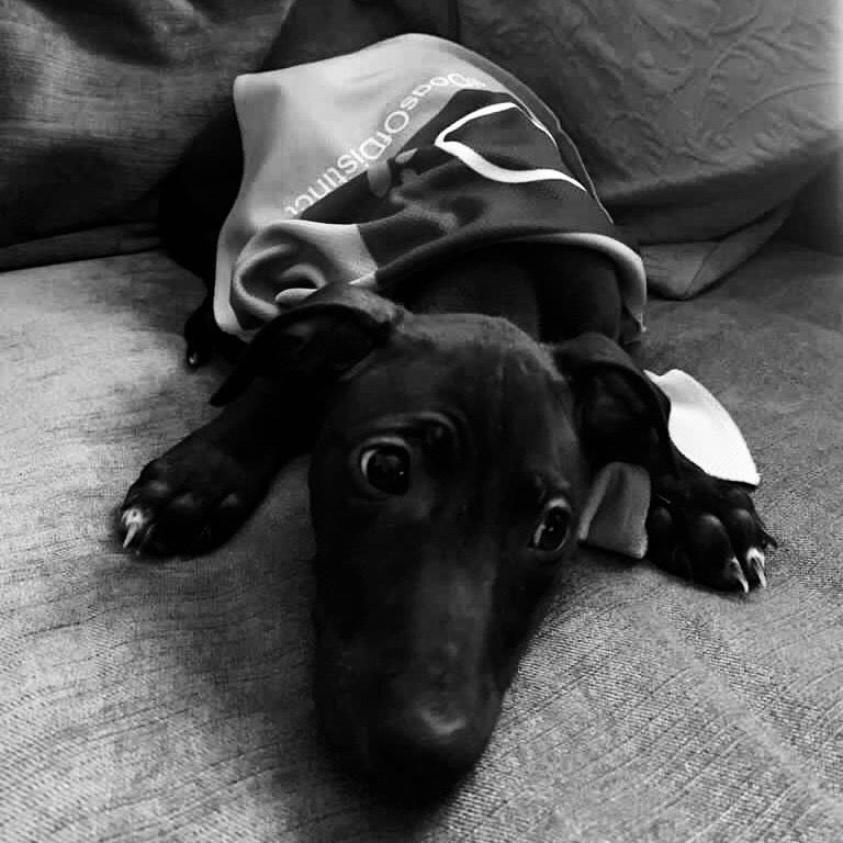 Roxy Dog